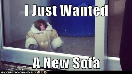 I just wanted a new sofa, monkey in coat at ikea, meme
