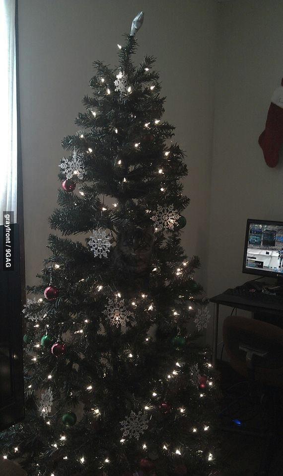 mindfuck, shitbrix, cat, christmas, tree, decorations, ornaments
