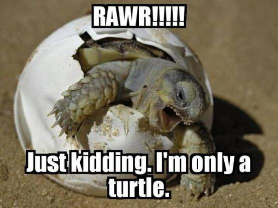 turtle, meme, egg, birth, cute, lol