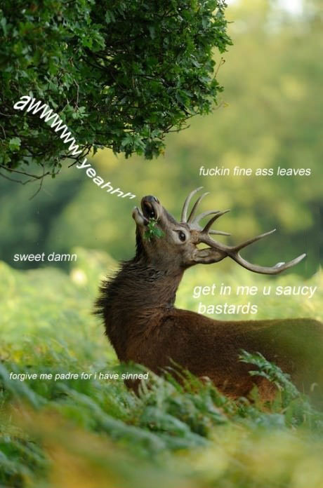 Deer, forest, leaves, lol