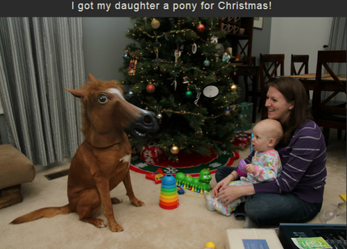 dog, horse, present, pony, christmas, tree