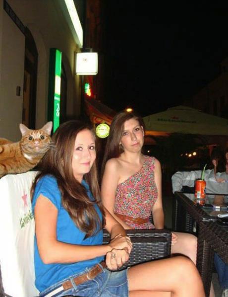 cat, freaky, smile, photobomb, girl
