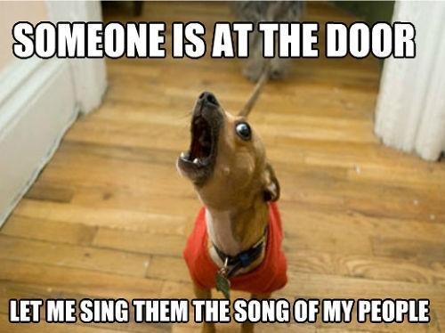 dog, meme, bark, sing