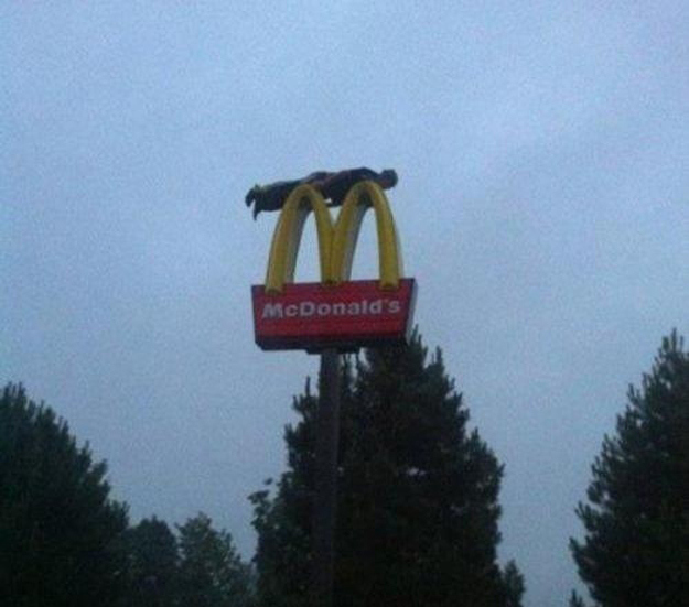 mcdonalds, sign, planking, golden arches, wtf