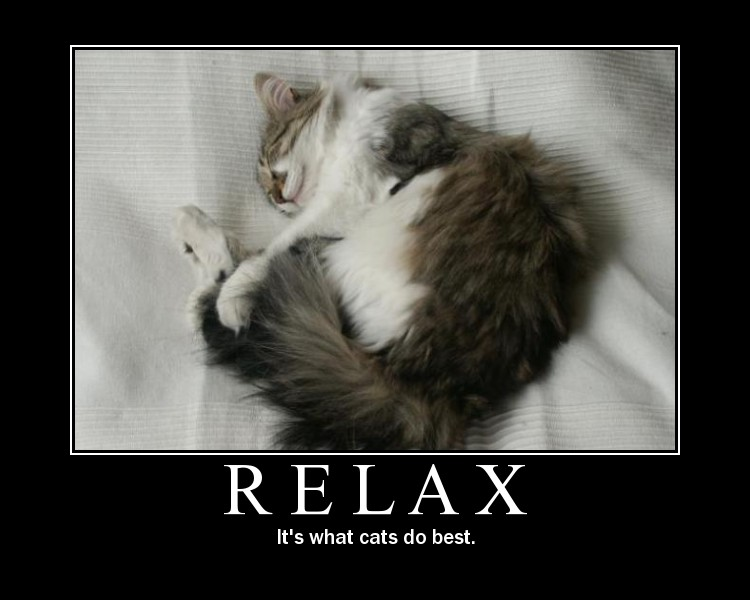 motivation, cat, relax,