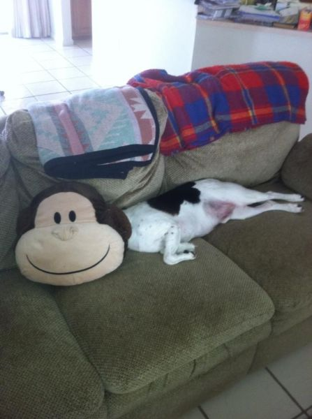 dog, monkey, pillow, face, perspective