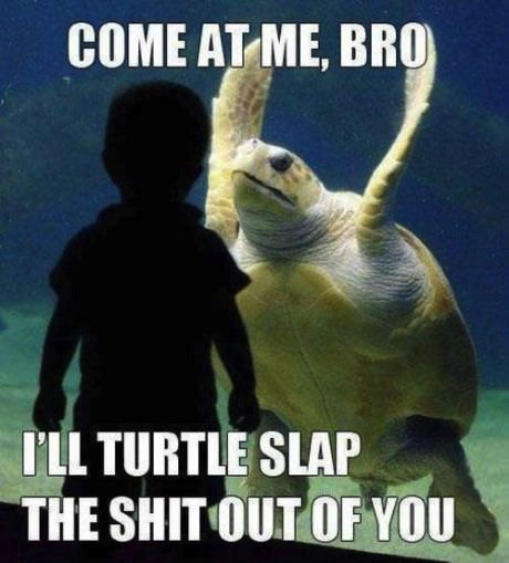 turtle, come at me bro, tortoise, slap, lol