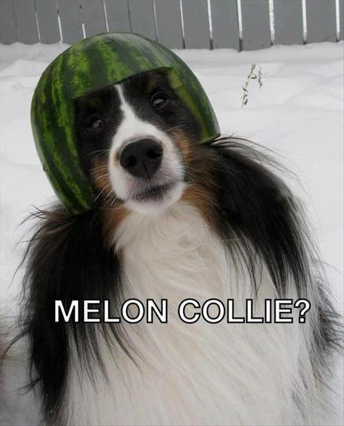 melon collie?, dog, pun, wordplay