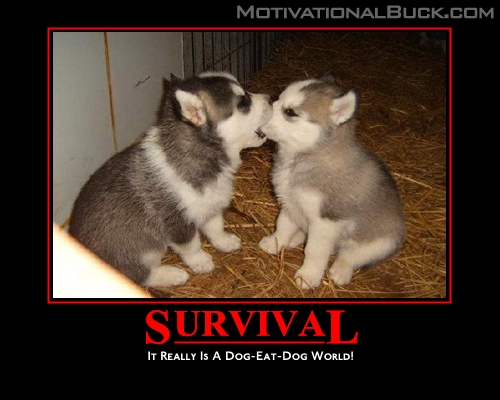 motivation, dog eat world