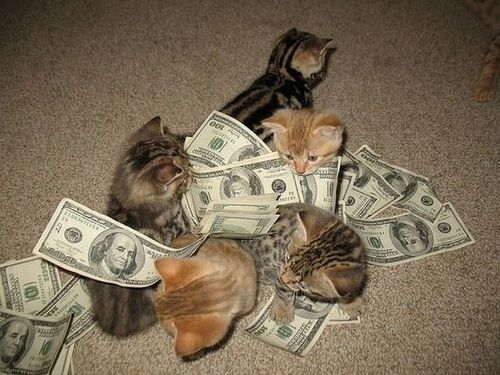 pussy, kitten, cash, money