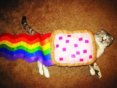 hacked irl, cat