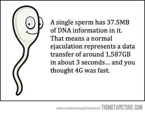 a single sperm has 37.5mb of DNA information in it, that means a normal ejaculation represents a data transfer of around 1587GB in about 3 seconds, and you thought 4g was fast