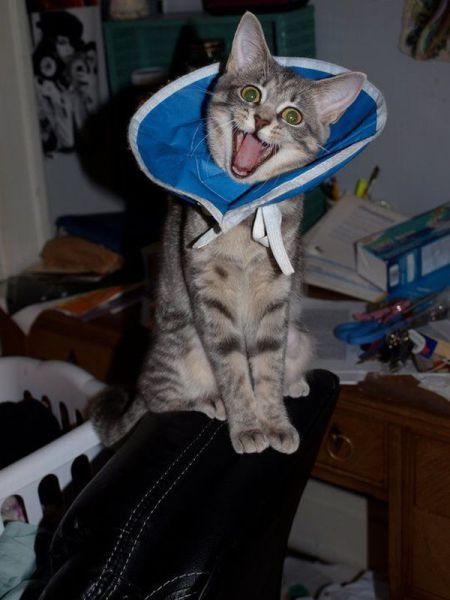 cat, smile, happy, lol