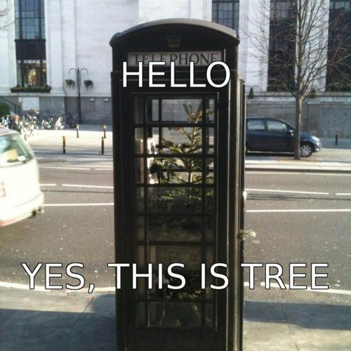 tree, wtf, phone booth, meme