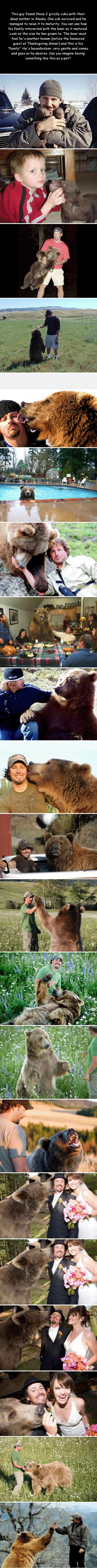 this guy found 2 grizzly cubs with their dead mother in alaska, what happens next will warm your heart, cool story