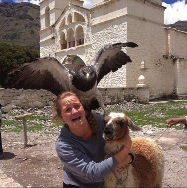 photobomb, eagle, llama, wtf, lol