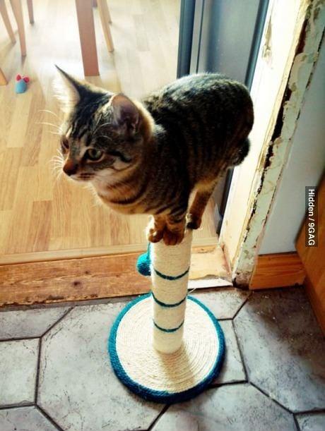 cat, kitten, wtf, lol