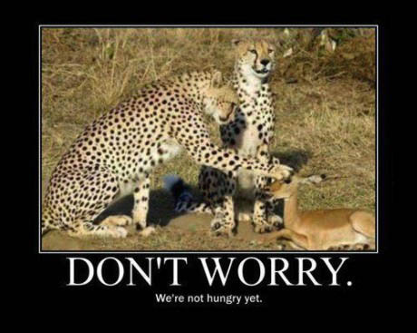 don't worry, leopard, antelope