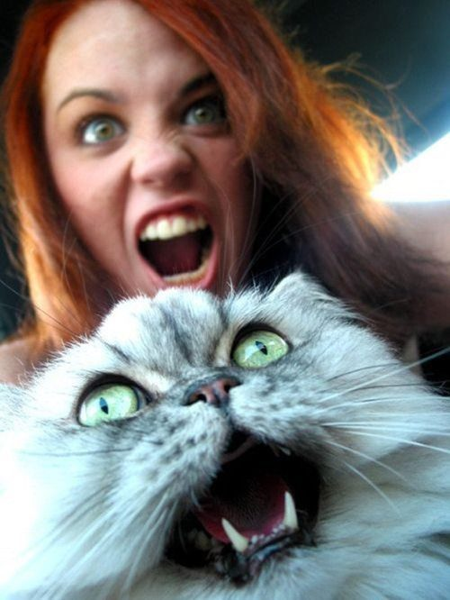 face, cat, girl, growl