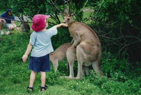 kangaroo, awkward, sex, mating