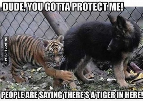 meme, tiger, scared, lol