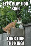 lion king, cat, meme