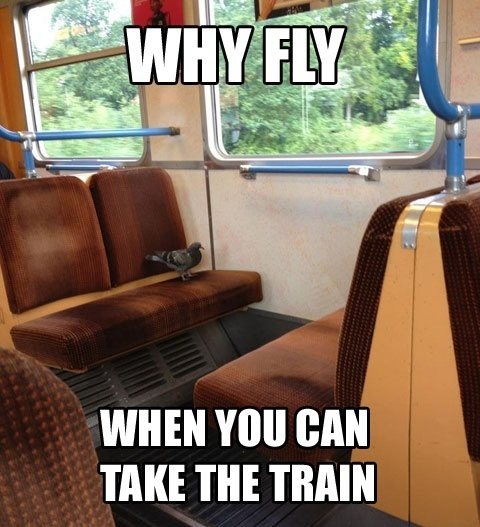 why fly when you can take the train, pigeon on train, meme