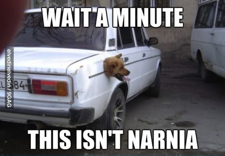 wait a minute this isn't narnia, meme, dog head stuck outside car trunk