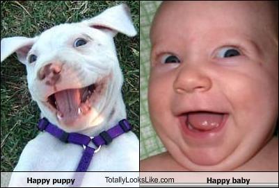 dog, baby, totallylookslike
