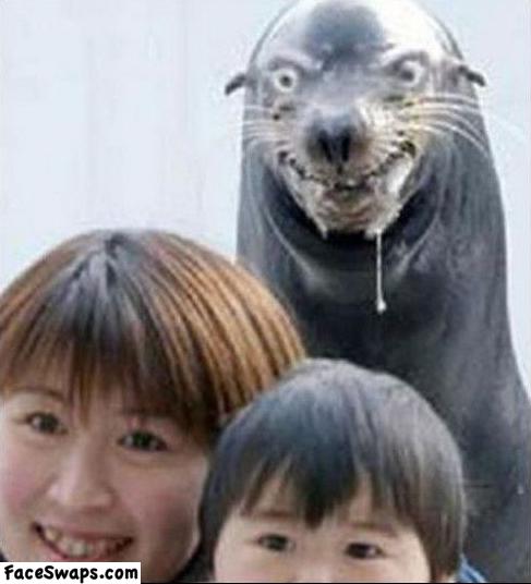 sea otter, evil look, wtf, photobomb