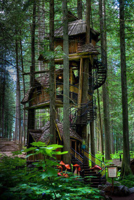 tree house, awesome, win, forest