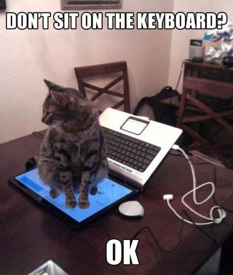 don't sit on the keyboard?, ok, cat sitting on laptop screen, meme