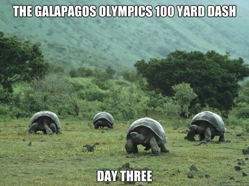meme, turtle, galapagos, olympics