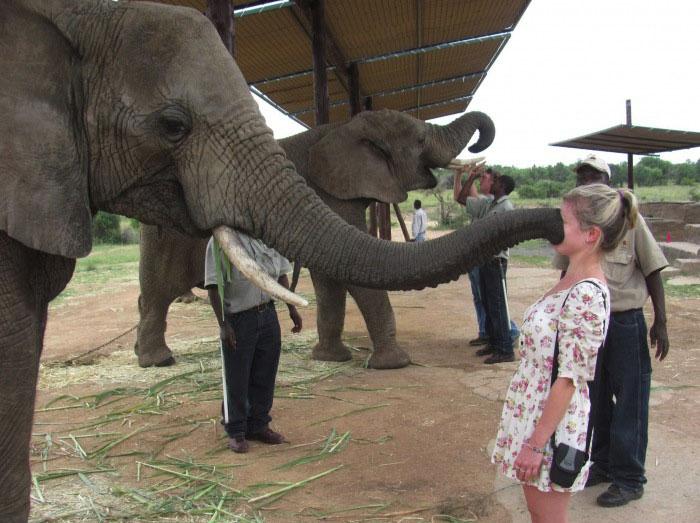 elephant, trunk, wtf, face sucking