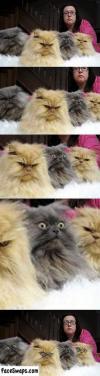 eye swap, cat, photobomb