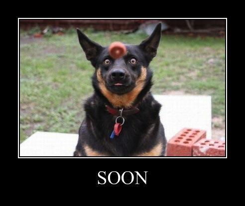 motivation, soon, dog, sausage
