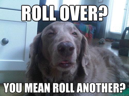 dog, stoner, weed, pot, marijuana, roll, meme
