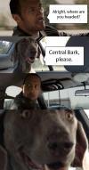 dwayne johnson, the rock, car, meme, comic, dog