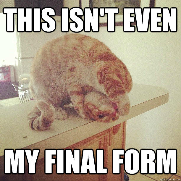 cat, flexible, contortion