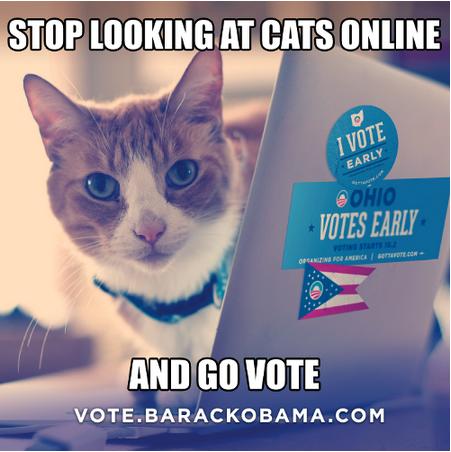 cat, vote, online, internet, politic