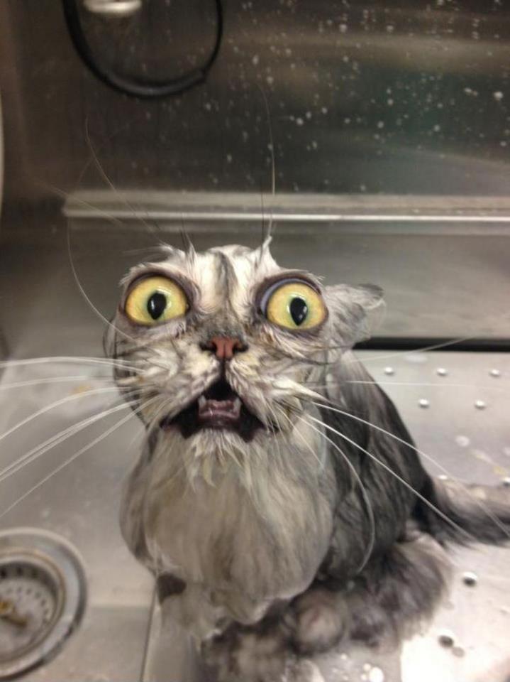 wet, cat