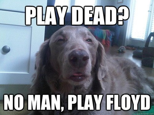 pink floyd, grateful dead, stoner dog