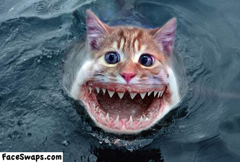 face swap, photoshop, cat, shark, wtf