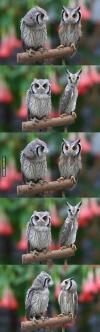owl, long, stop it
