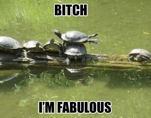 turtle, fabulous, bitch