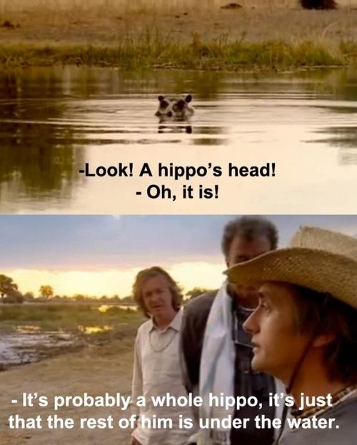 hippo, captain obvious, sarcasm