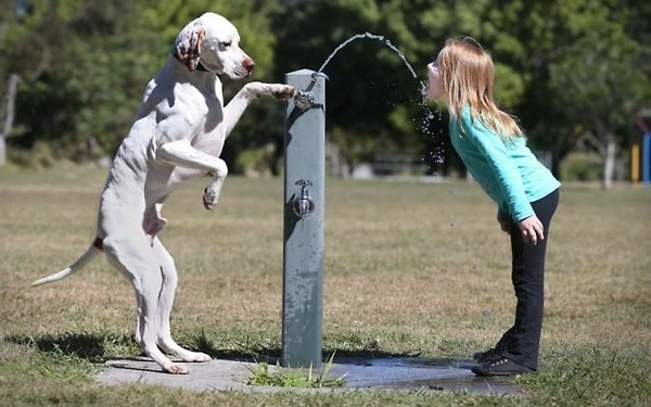 dog helping a little girl drink some water, wait what?