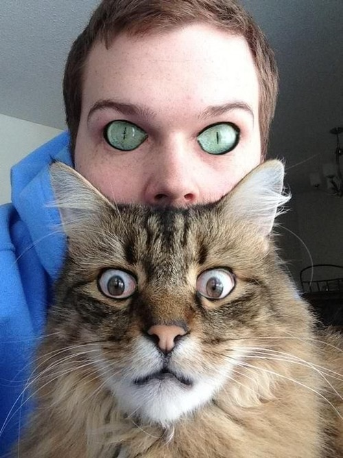 Photoshop Cat Face Cat Eye Swap Face Photoshop