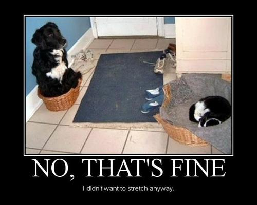 no that's fine I didn't want to stretch anyway, cat sleeping in dog bed and dog sitting in cat bed, lol, motivation