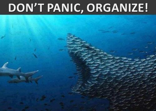 fish, panic, organize, team work